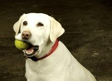 [Clip] Chú chó đánh Tennis bằng Wii thắng người lớn