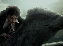 5 ý tưởng cho các bộ phim Spin-off của Harry Potter