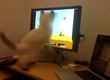 Mèo con chơi... săn vịt