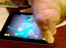 Ngộ nghĩnh chú mèo thích chơi game