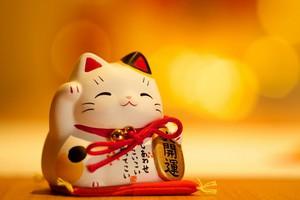 Mua Mèo Chiêu Tài trong năm Chuột: Có nên không?