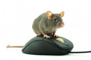 Vì sao chuột máy tính lại được gọi là...'chuột', thay vì tên của một loài động vật khác?