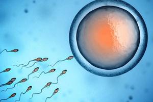 7 sự thật khó đỡ mà bạn chưa biết về tinh trùng