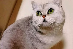 Cô mèo sống sót sau 40 ngày