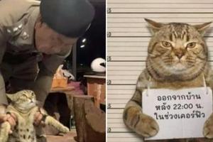 Vi phạm lệnh giới nghiêm, chú mèo bị cảnh sát bắt giữ khẩn cấp làm gương