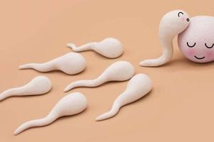 Chuyện chưa biết về tinh trùng: Cuộc đua kỳ lạ nhất thế giới, lúc gấp gáp, lúc nhẩn nha!