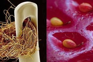 Những đồ vật bình thường dưới kính hiển vi trông sẽ kỳ lạ như thế nào?