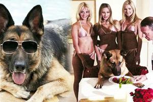 Gia tộc chó giàu nhất hành tinh: Tài sản 400 triệu USD, sở hữu tập đoàn riêng, biệt thự 7000 mét vuông chạy mỏi chân