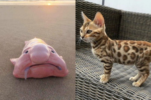 Những loài động vật với ngoại hình dị thường khiến người xem chả hiểu kiểu gì