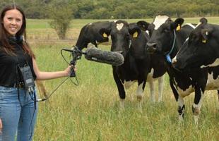 Đàn bò dẫm phải cáp quang, Internet gặp sự cố