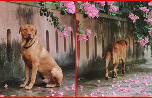 Chú chó ngồi đợi dưới mưa để gặp mặt crush khiến dân mạng bùi ngùi xúc động