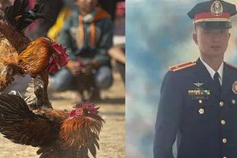 Đi bắt ổ chọi gà bất hợp pháp, cảnh sát trưởng bị gà đá thiệt mạng