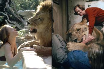 Thành viên ekip bị sư tử nhai đầu, nữ chính bị vồ suýt mất thị giác, cả trăm người bị thương trong bộ phim nguy hiểm nhất lịch sử