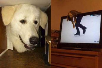 """Những khoảnh khắc """"cú lừa ảo thật đấy"""" đến từ các loài động vật"""