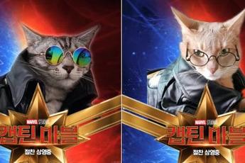 """Cười rụng răng khi """"mèo nhà"""" tạo dáng thành """"quàng thượng"""" trong Captain Marvel"""